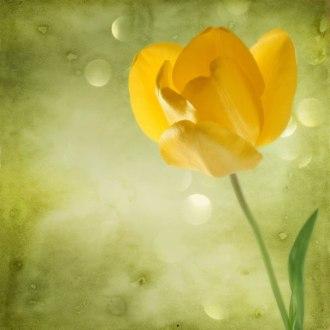 """Желтый тюльпан"" цена за 1 кв. м."