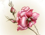 """Красивая роза № 1"" цена за1 кв.м."