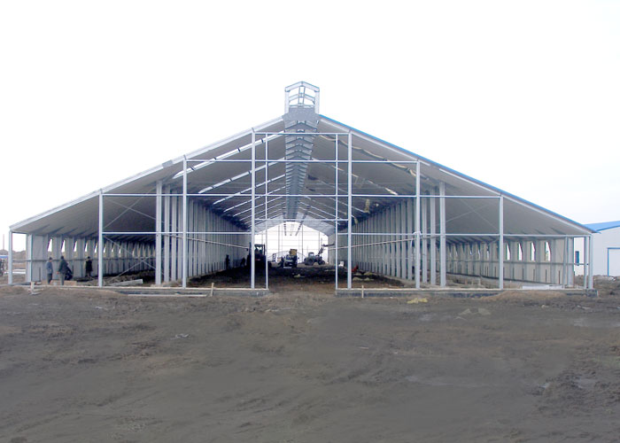 КРС, молочная ферма.